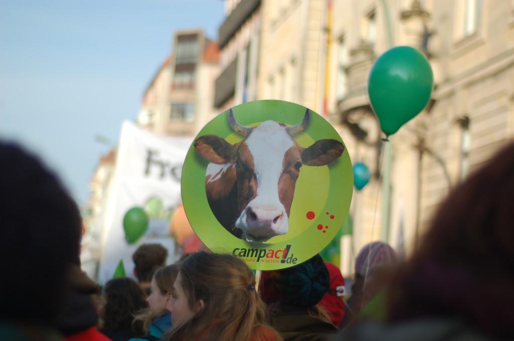 ... und Kühe